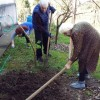 In Anaseuli Elderly house - the seed season was started